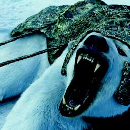 Framestore is lauded for CG polar bear Iorek in The Golden Compass